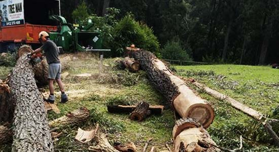 The Tree Man - Land Clearing Shoalhaven