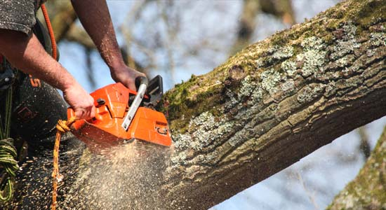 The Tree Man - South Coast Tree Surgeon