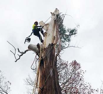 The Tree Man - Tree removal Nowra & Shoalhaven