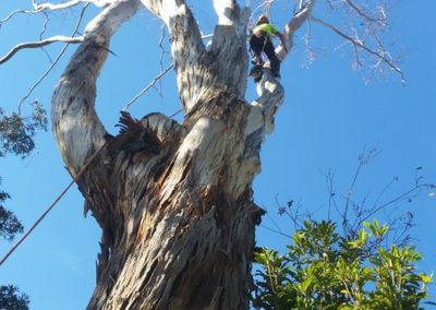 branch-removal-nsw