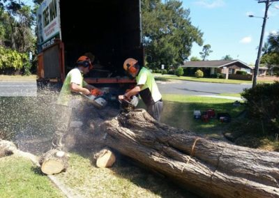 tree-removal-chopping
