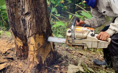 Everything You Need To Know About Tree Removal
